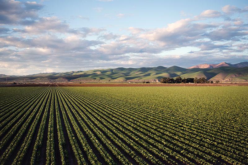 Poljoprivredno polje